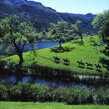 alisal-guest-ranch-horseback