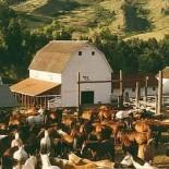 eatons-ranch-horses