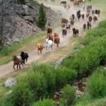 elkhorn-ranch-montana-horses