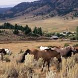 g-bar-m-ranch-horses