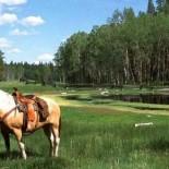 siwash-lake-ranch-horse
