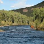 rainbow-trout-ranch-horse-conejos-river