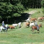 malibu-dude-ranch_cattle-drive