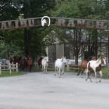 malibu-dude-ranch_horses