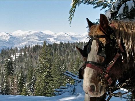sleigh-ride-western-pleasure-ranch-idaho
