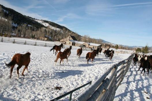 horse-feeding-time-ranch-rock-creek
