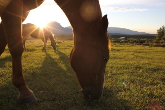 triangle-x-sunbeam-horses