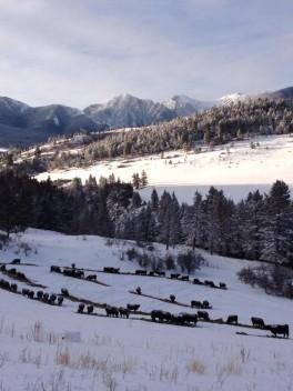 winter-valley-morning-at-63