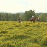 74-ranch-group-horseback-ride-pasture