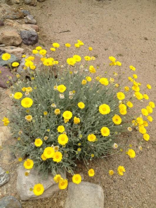 elkhorn-ranch-flowers-2