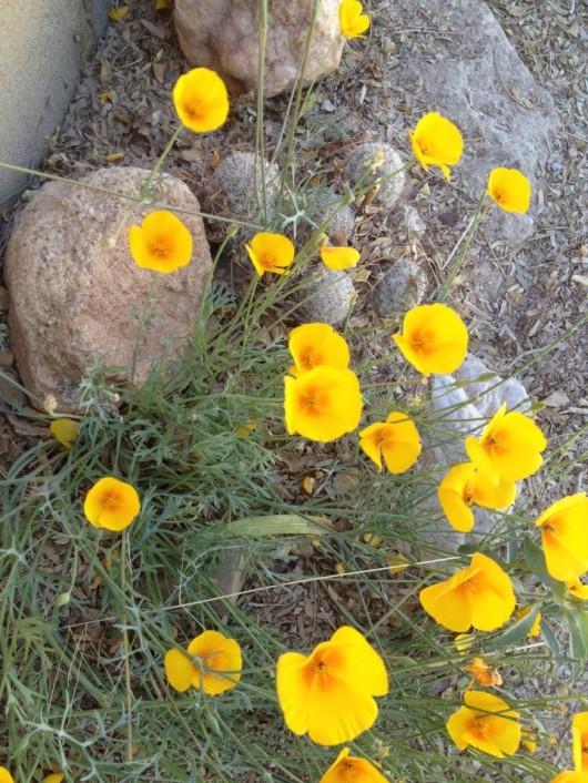 elkhorn-ranch-flowers-3