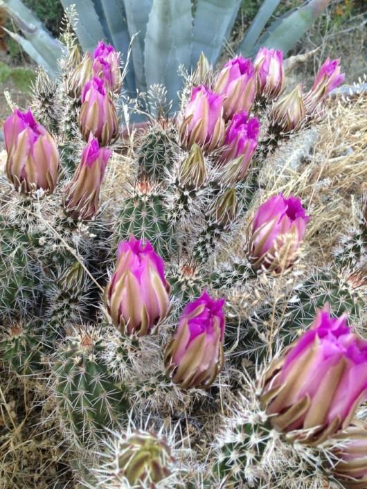 elkhorn-ranch-flowers-4