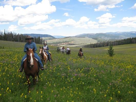 elkhorn-ranch-mt-wildflowers