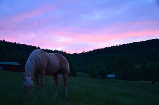 horseshoe-canyon-guest-ranch-sunset