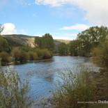 rainbow-trout-ranch-conejos-river-view