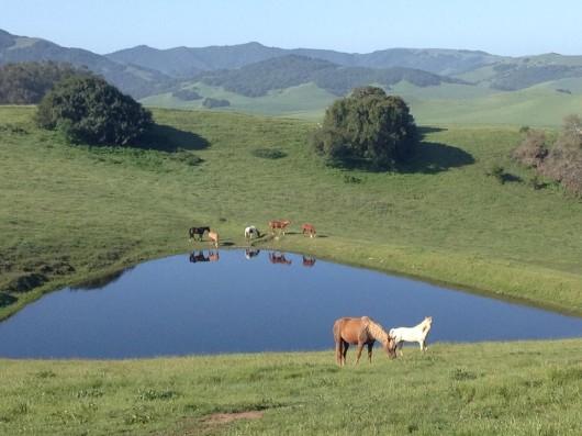 rolling-hills-bitterroot-ranch