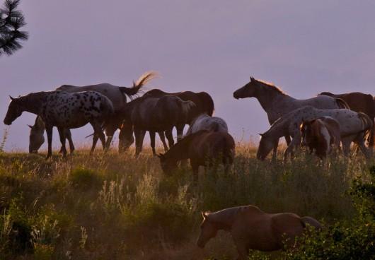 horses-bull-hill-guest-ranch