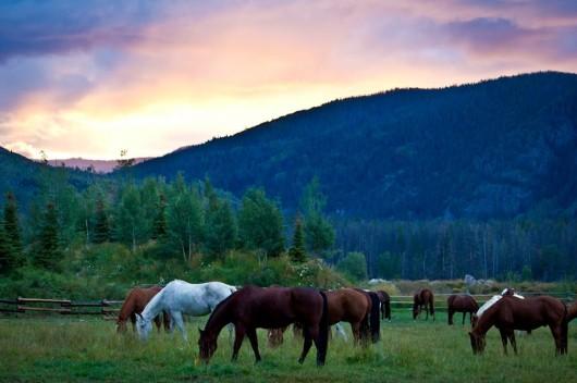 horses-sunrise-vista-verde