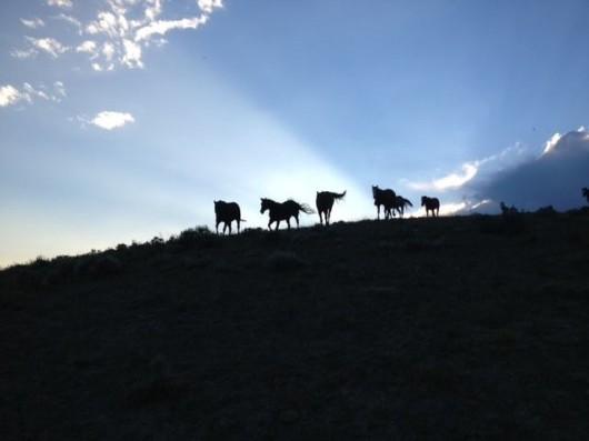 laramie-ranch-horses
