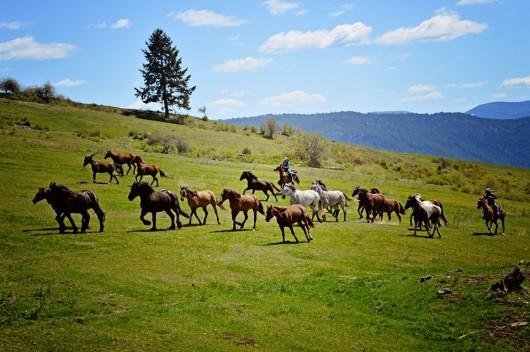 morning-roundup-bull-hill