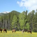 bear-creek-ranch-horses