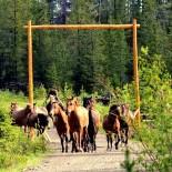 Horses at Big Creek Lodge, BC Canada