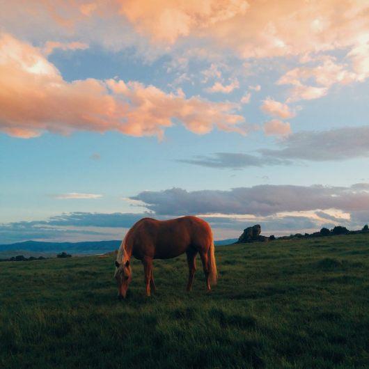 brush-creek-ranch-horse-rock