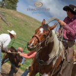 Diamond 7 Bar Ranch Horseback
