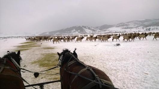 elk-feeding-ground-goosewing-ranch