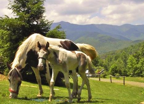 horses-clear-creek-ranch