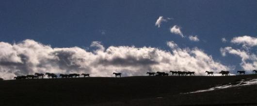 nine-quarter-circle-move-to-greener-pastures