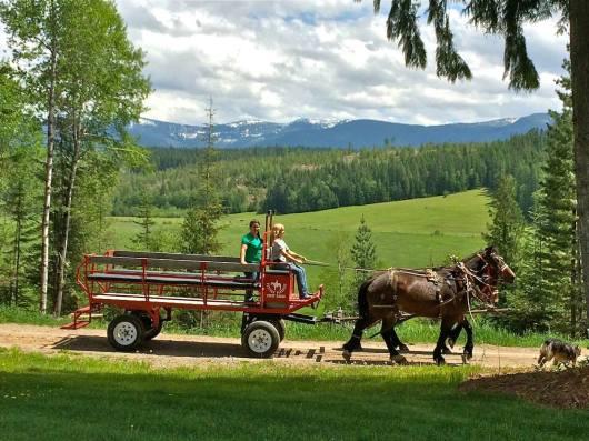 western-pleasure-wagon-ride